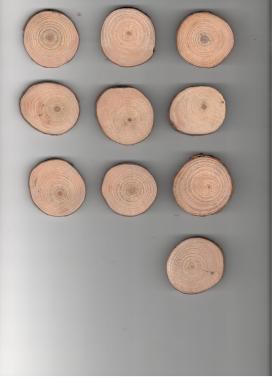 Wood slice set 2